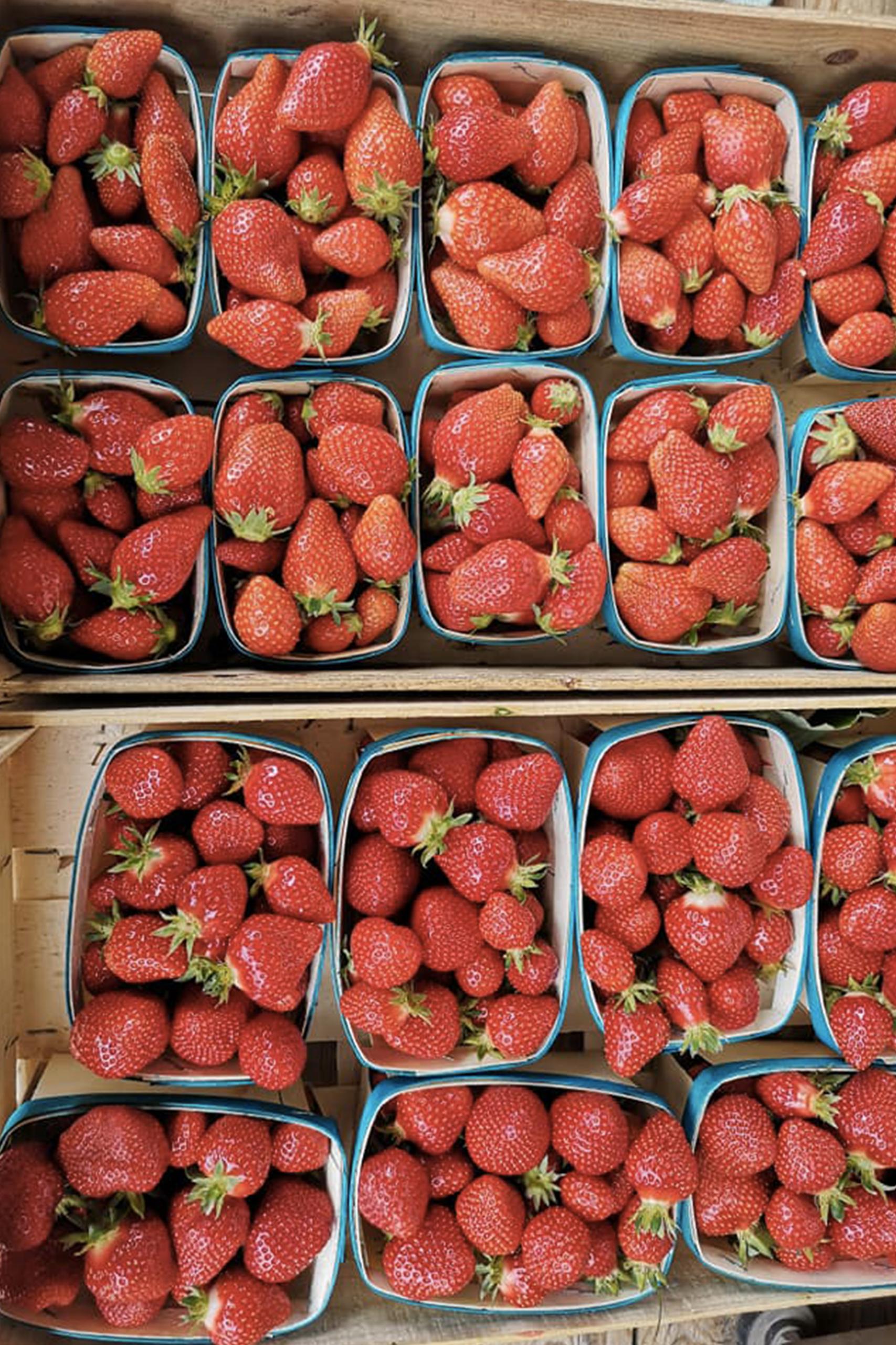 fraises-cravonnaise---cagette